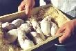 В Нижнетавдинском районе будут производить больше мяса и молока