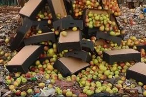 Скармливать скоту санкционные продукты предлагает Россельхознадзору новосибирское «Яблоко»