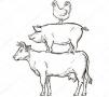 В январе-мае этого года объем производства основных видов мяса в России составил 3 401,8 тыс. тонн