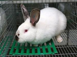 Североосетинская ферма по разведению кроликов получила республиканский грант