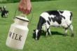 Минсельхоз объяснил отказ от закупочных интервенций на рынке молока