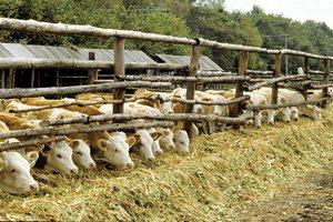 В Забайкалье просят население сдавать деньги на закупку кормов для скота