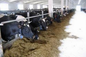 Губернатору Красноярского края показали образцовое фермерское хозяйство
