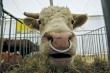 В стране идет вынужденное сокращение поголовья и забой скота. Россия все меньше производит продовольствия и все больше импортирует