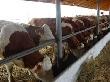 В Минсельхозе республики Адыгея состоялось обсуждение состояния животноводческой отрасли