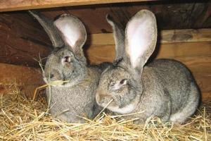 Выйти на полную мощность в 2019 планирует кролиководческая ферма в казахском Темиртау