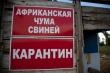На Кубани оздоровили 10 зараженных чумой свиней объектов