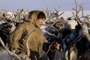 Погода благоприятствует оленеводческим хозяйствам в проведении убойной кампании