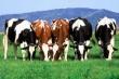 Цена на фьючерс КРС (live cattle) на бирже торгуется в коридоре - трейдеры