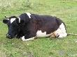 Немцы учат томских специалистов правильно лечить коров