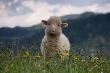Фермеров Коми интересуют малозатратные животные