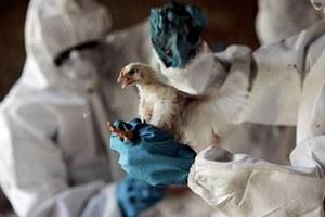 В Индиане обнаружили новый вид птичьего гриппа