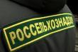 Россельхознадзор: власти Волгоградской области неэффективно борются с АЧС
