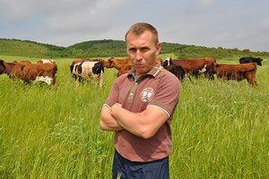 Депутаты разрешили штрафовать забайкальцев за вольный выпас скота
