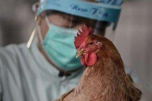 """На одной из площадок """"Урсдона"""" проводятся мероприятия по ликвидации очага заболевания гриппом птиц"""
