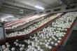 В США количество яиц размещенных в инкубаторах уменьшилось на 1%