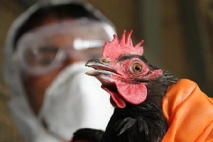 Ирак сообщил о первой за последние 10 лет вспышке птичьего гриппа
