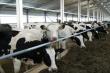 Президент России подписал закон об изменении требований к лизингу мясного скота