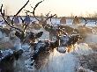 Бизнесменов Тувы обязали инвестировать в оленей