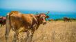 В апреле правительство Новой Зеландии объявило о запрете на экспорт живого скота морским транспортом