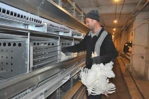Бердская птицефабрика наращивает производство экологичной продукции