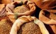 Цены на зерно в России могут возрасти на 5-8%