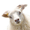 Альтернативное животноводство