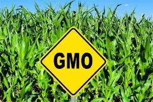 Просим к столу. США упрощают регистрацию новых линий ГМО