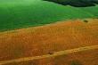 Крупный китайский холдинг вложит почти 10 млрд рублей в российское сельское хозяйство