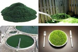 В наукограде Кольцово разработали корма с микроводорослями