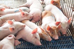 По данным Еврокомиссара по сельскому хозяйству, европейский сектор свиноводства проявляет признаки восстановления, но отрасли не стоит расслабляться