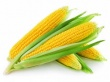Вице-губернатор Приморья: Результат выращивания кукурузы превзошел ожидания Хрущева