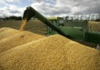 Цены на российском зерновом рынке продолжают укрепляться