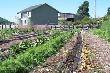 Крестьянско-фермерские хозяйства становятся ведущими «игроками» в аграрном секторе Хабаровского края