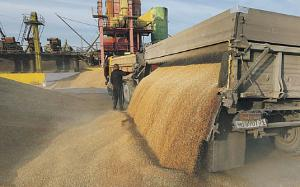 Государство берет под контроль торговлю зерном. К исполнению майского указа подключат иностранные компании