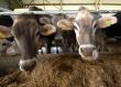 Обеспеченность российских аграриев концентрированными кормами превышает 91%